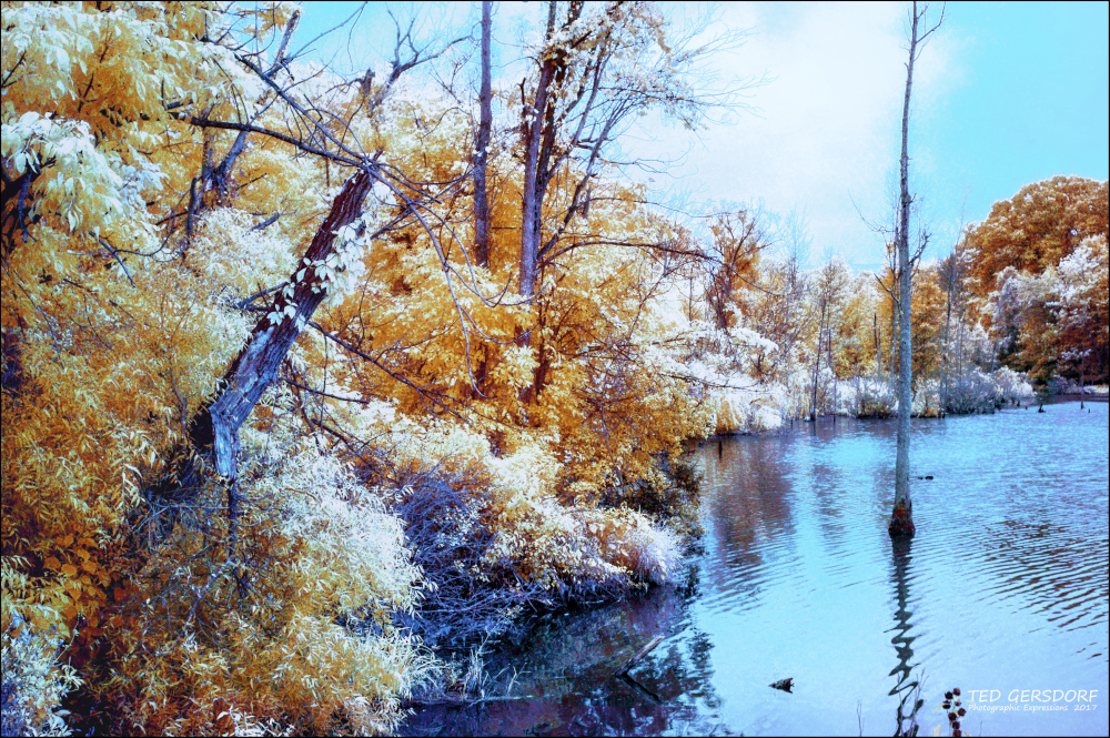 D3300 Infrared Conversion Photos-wako-ir-redo-4_01.jpg