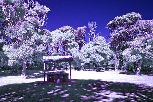 infrared pics on a D40/40x-infrared-filter.jpg