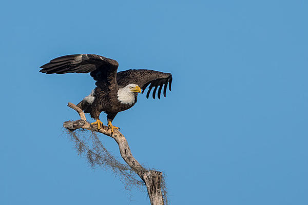 Post Your D500 Shots-eagle-lifting-off-ld-2.jpg