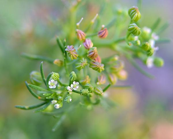 Has anyone ever tried these extension tubes.-zsc_8582_stitchn.jpg