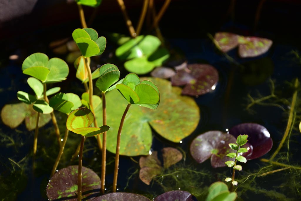 Post Your D7200 Photos-pond-life.jpg