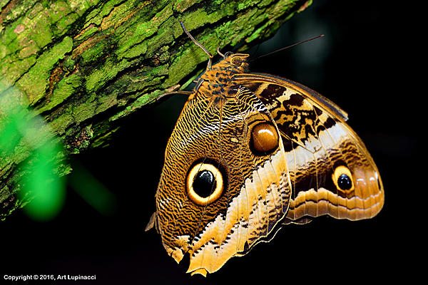 My Favourite D800 Images-butterfly_01.jpg