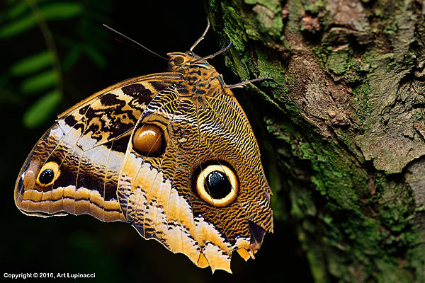 My Favourite D800 Images-butterfly_02.jpg