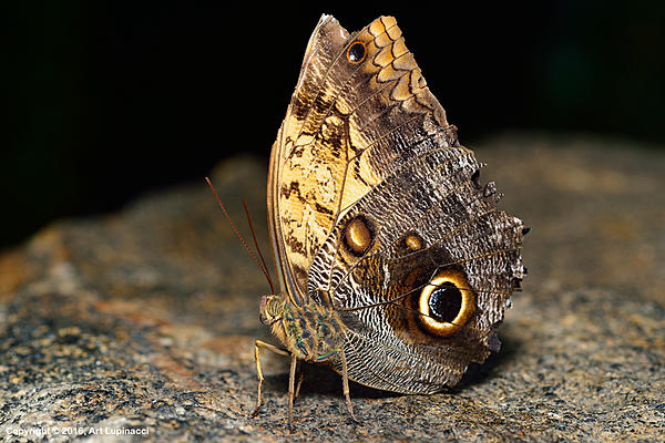My Favourite D800 Images-butterfly_03.jpg