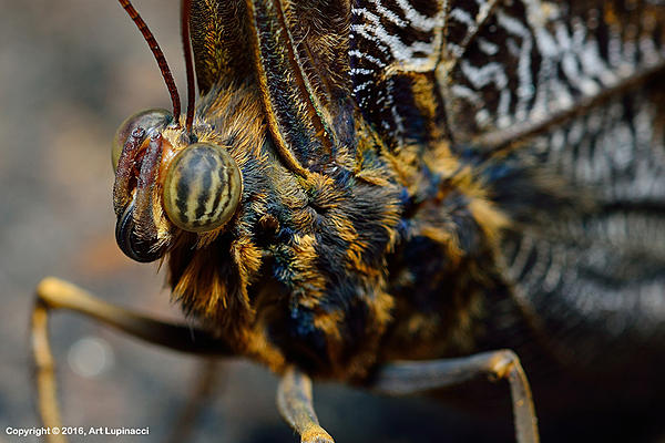 My Favourite D800 Images-butterfly_04.jpg