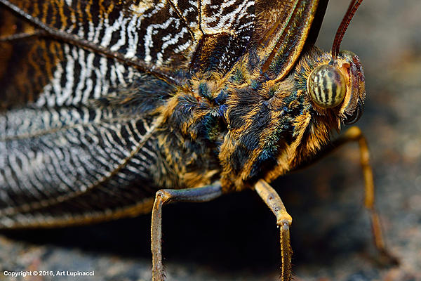 My Favourite D800 Images-butterfly_05.jpg