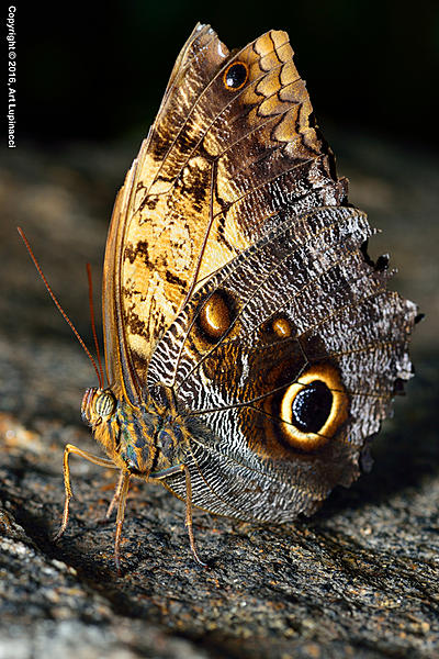My Favourite D800 Images-butterfly_06-.jpg