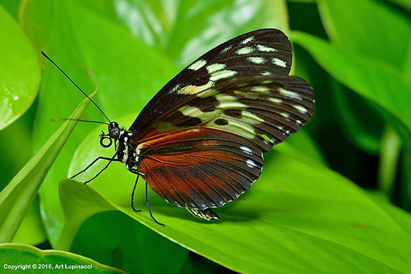 My Favourite D800 Images-butterfly_76-.jpg