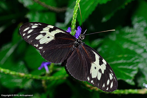My Favourite D800 Images-butterfly_85-.jpg