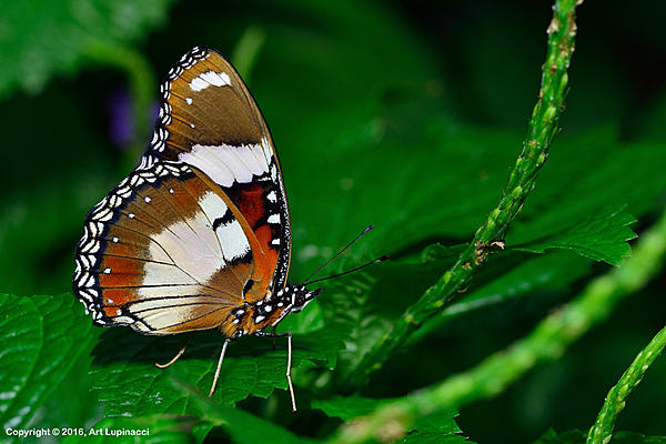 My Favourite D800 Images-butterfly_116-.jpg