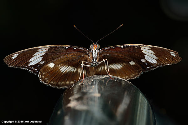 My Favourite D800 Images-butterfly_202-.jpg