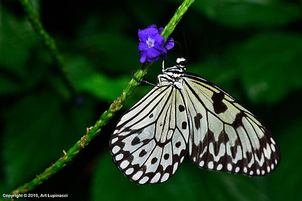 My Favourite D800 Images-butterfly_132-.jpg