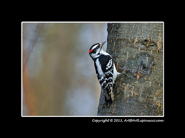 My Favourite D800 Images-woodpecker2.jpg