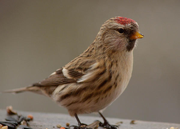 My Favourite D800 Images-071.jpg