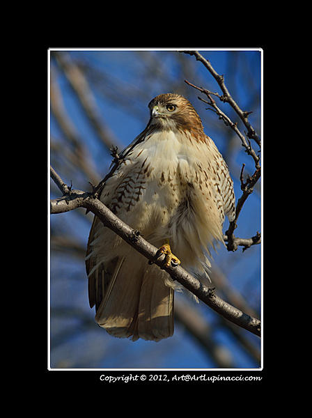 My Favourite D800 Images-rth-perch.jpg