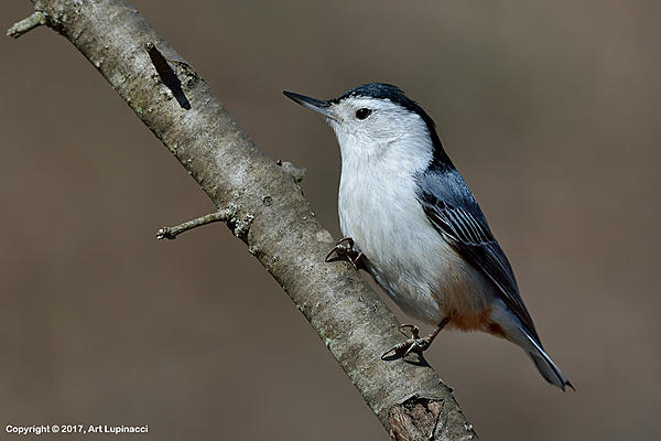 My Favourite D800 Images-nuthatch_02.jpg