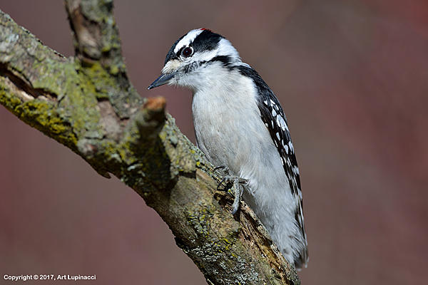 My Favourite D800 Images-woodpecker_1.jpg