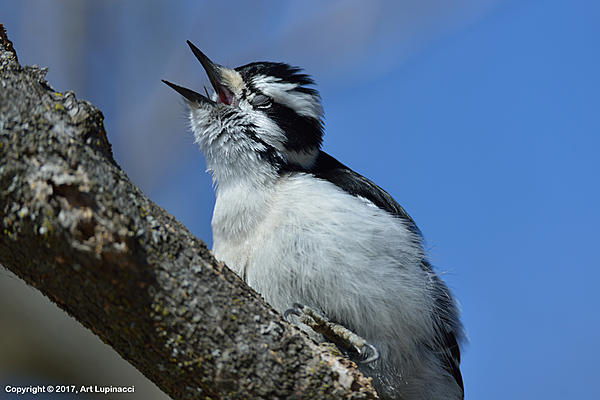 My Favourite D800 Images-woodpecker_2.jpg