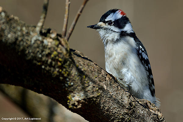 My Favourite D800 Images-woodpecker_3.jpg