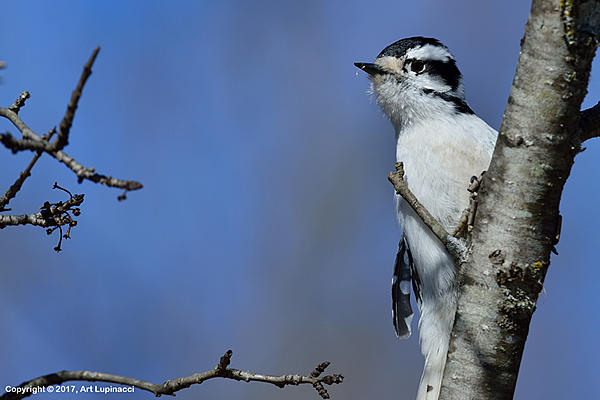 My Favourite D800 Images-woodpecker_5.jpg