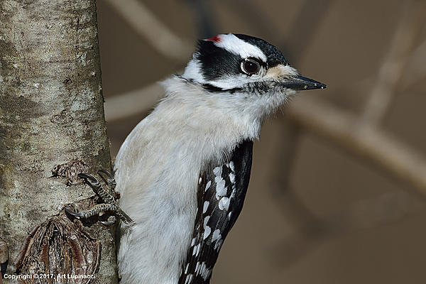 My Favourite D800 Images-woodpecker_6.jpg