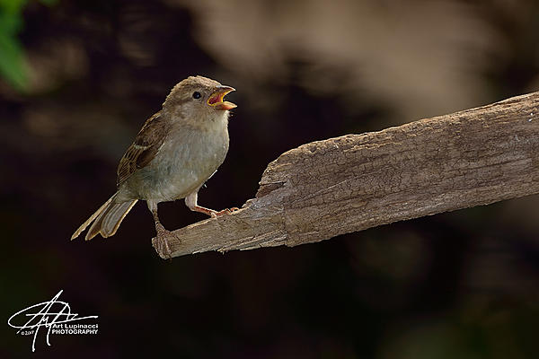 My Favourite D800 Images-sparrow_01.jpg