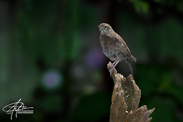 My Favourite D800 Images-sparrow_1.jpg