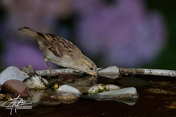 My Favourite D800 Images-sparrow_03.jpg
