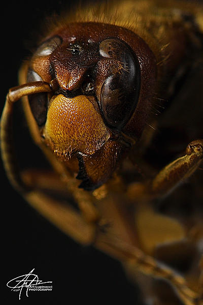 Post your D850 photos here-wasp-cu.jpg