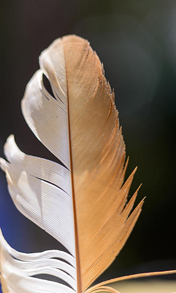 Feathers-feather.jpg