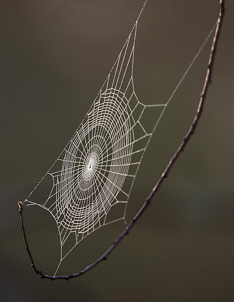 Post a Spider Web-ls-0610.jpg