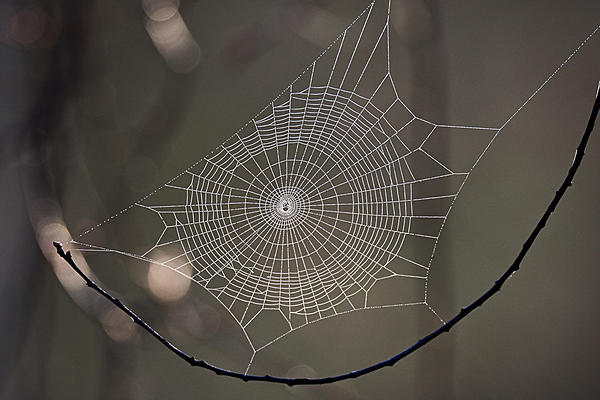 Post a Spider Web-ls-0617.jpg