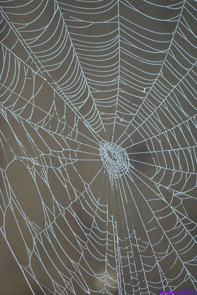 Post a Spider Web-dsc_4968_01.jpg