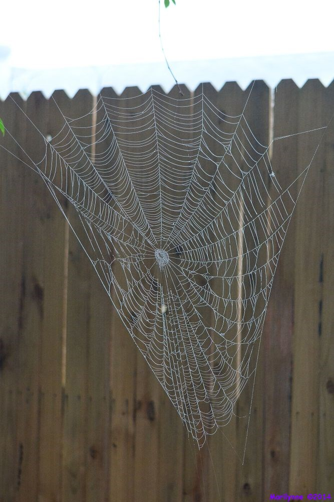 Post a Spider Web-dsc_4971_01.jpg