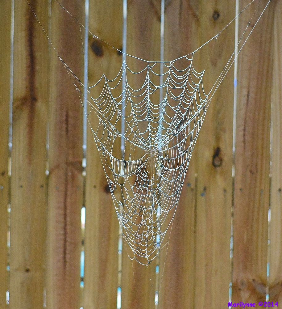 Post a Spider Web-dsc_3280_01.jpg
