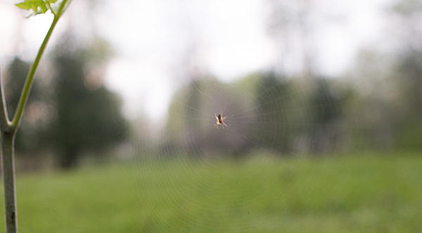 Post a Spider Web-spiderz2-6501.jpg