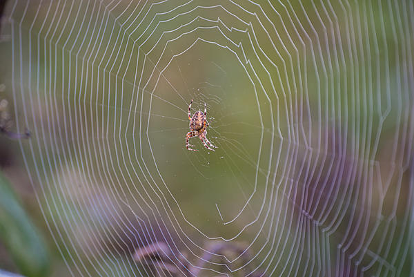 Post a Spider Web-dsc_3397.jpg