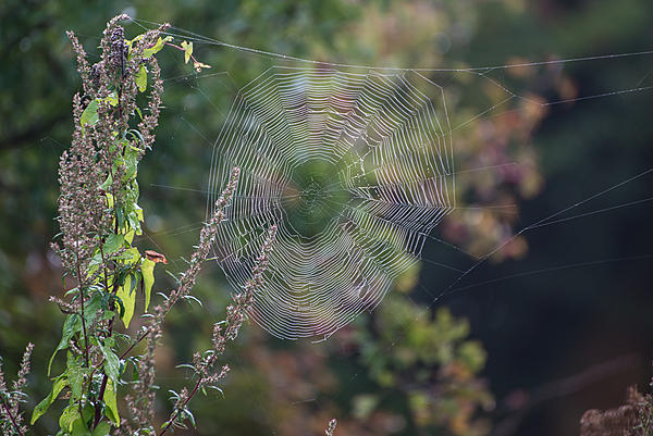 Post a Spider Web-dsc_3428.jpg