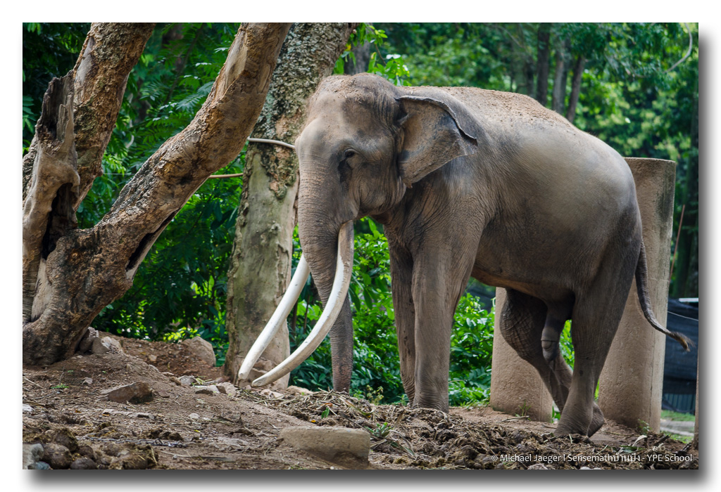 18+ Viewer discretion is advised-elephant-nude-2.jpg