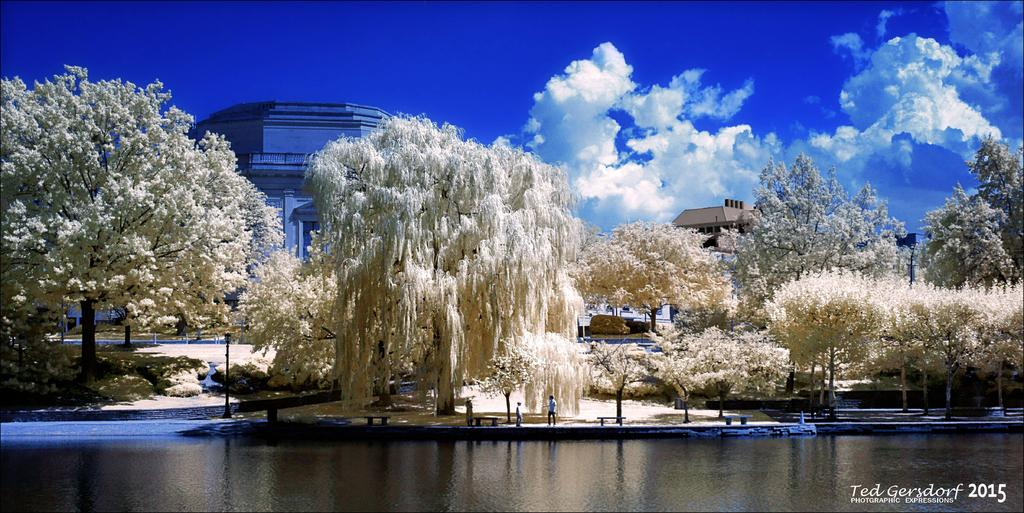 Post Your Infrared Shots-11-15-15-misc-reworks-50.jpg
