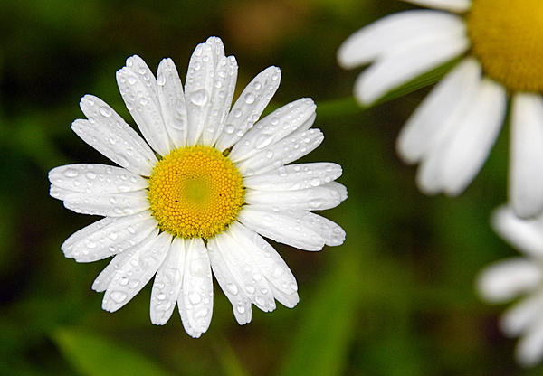 Post your flower pics-dsc_0049_3.jpg