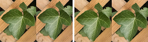 Which to Buy Now? D500 or D750-leaves.jpg