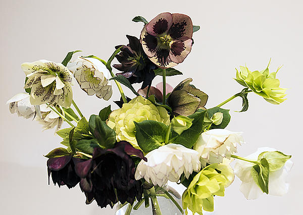 Post your flower pics-hellebore-bunch-web-final.jpg