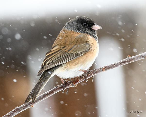 Post your favorite January shot 2018-junco-300.jpg