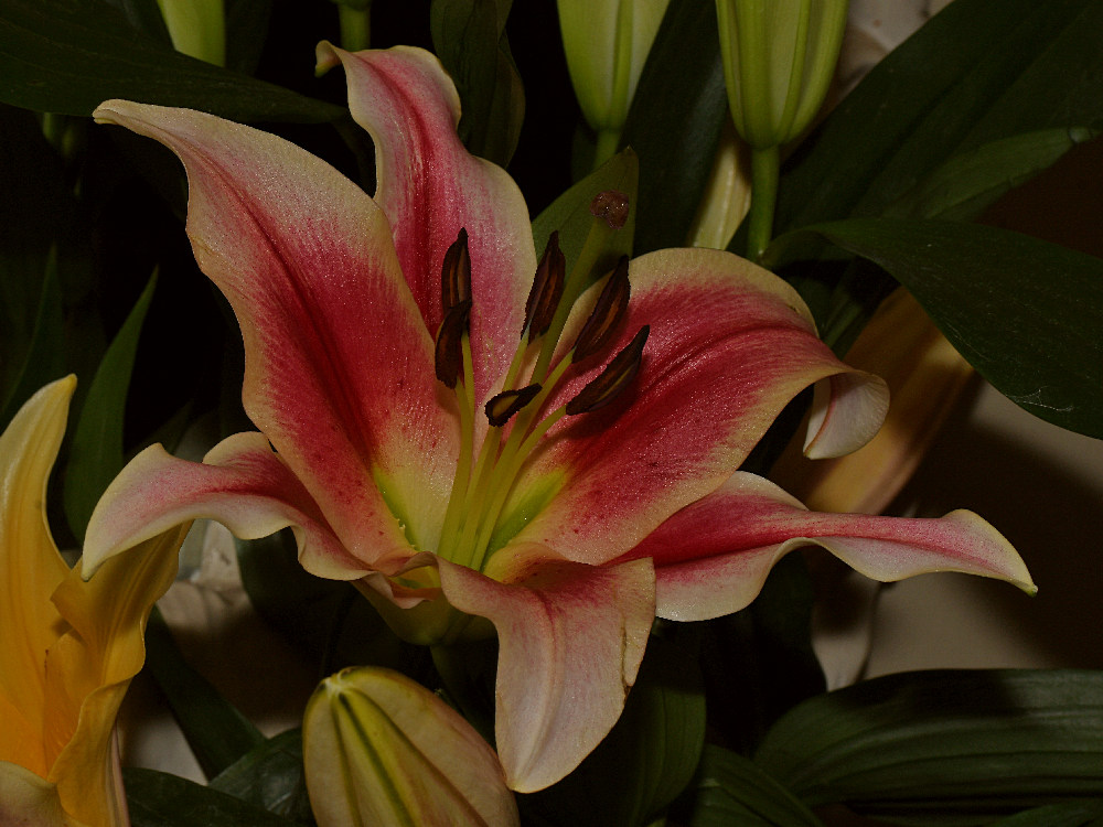 Post your flower pics-lily.jpg