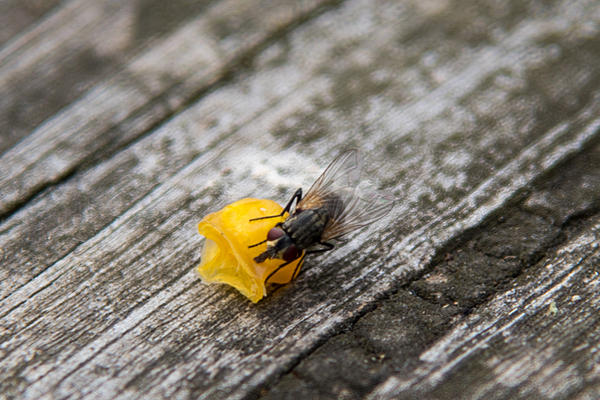 Post your Insect shots-nik_9080.jpg