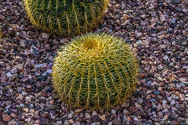 Cactus and succulents-dsc_1200.jpg