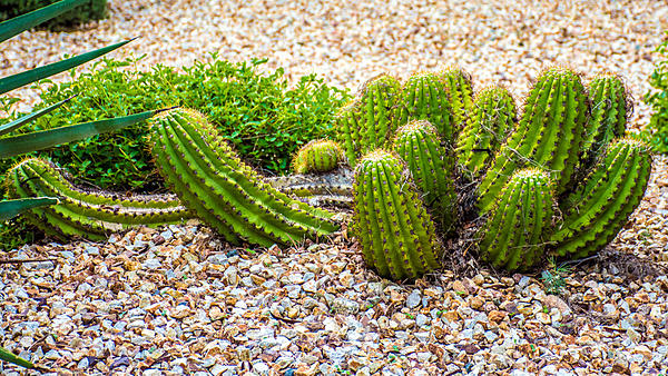 Cactus and succulents-dsc_0985.jpg