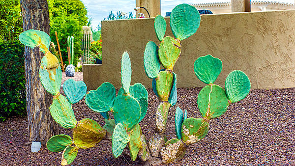 Cactus and succulents-dsc_1027.jpg