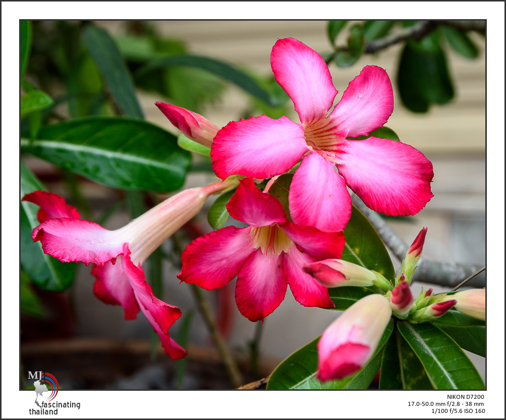 Post your flower pics-red-blossoms-1.jpg